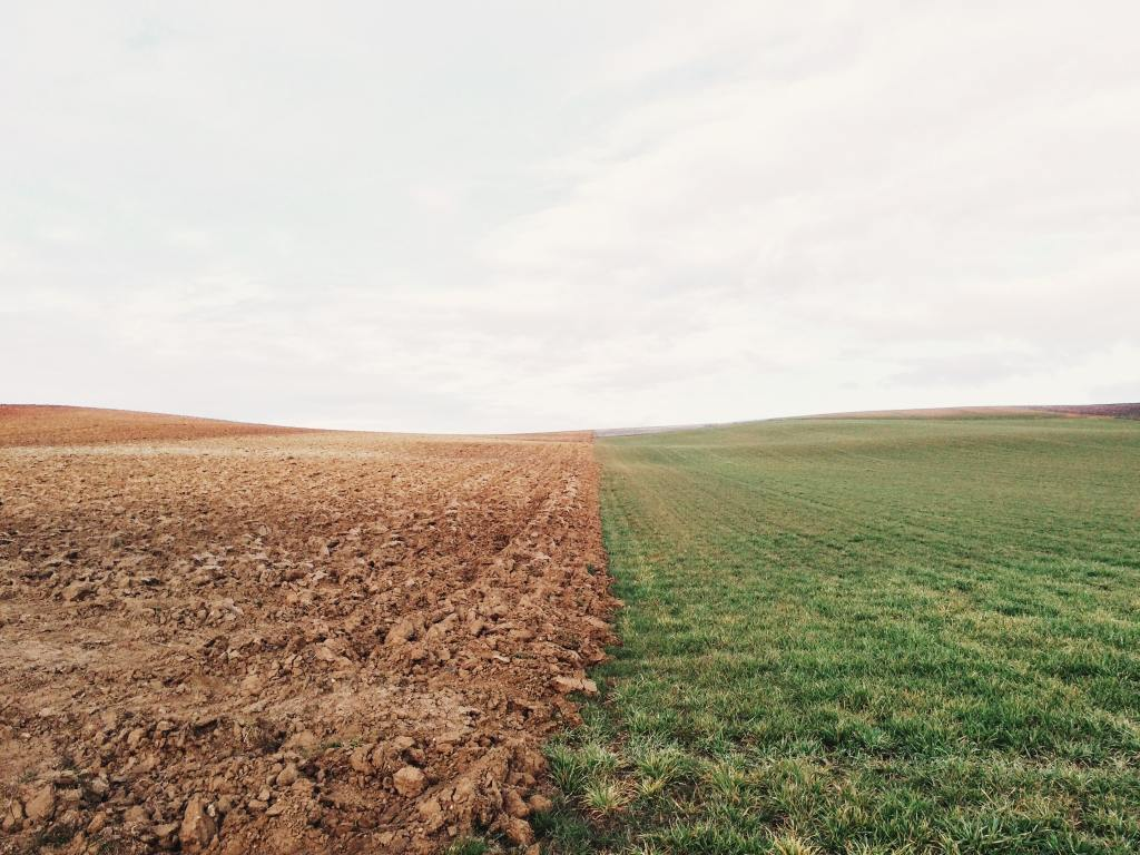 Dürre neben Grasland
